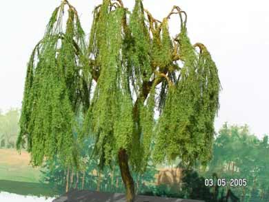 modellbaum-bau-2